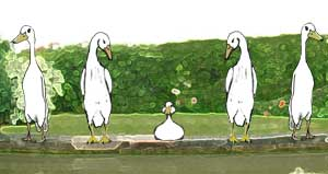 Negative ducks